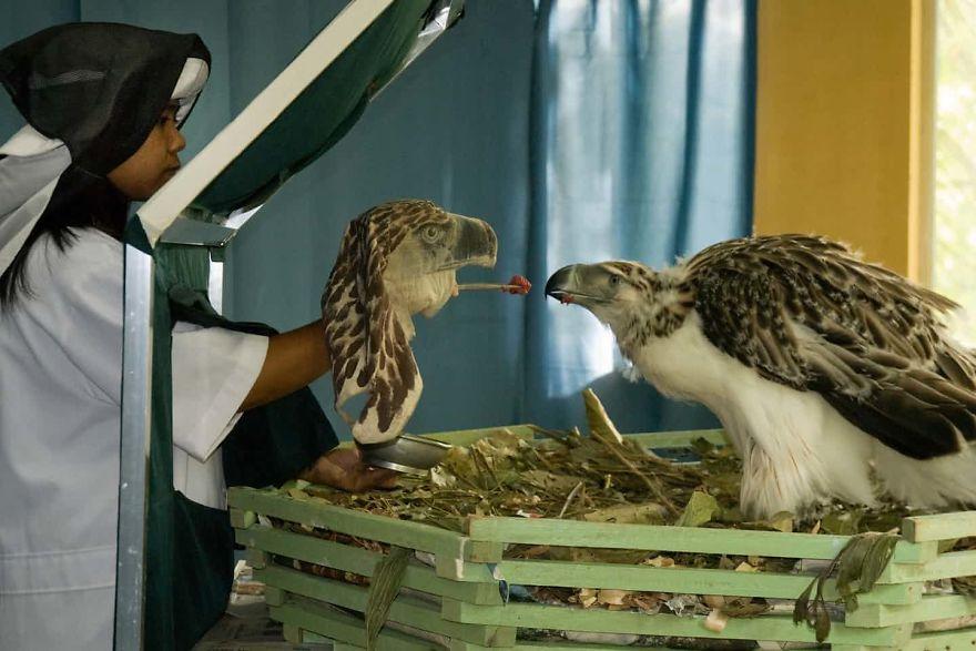 Photographers Against Wildlife Crime
