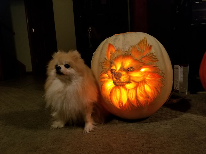 I Carved A Dog-O-Lantern That Looks Like My Pomeranian Sophie