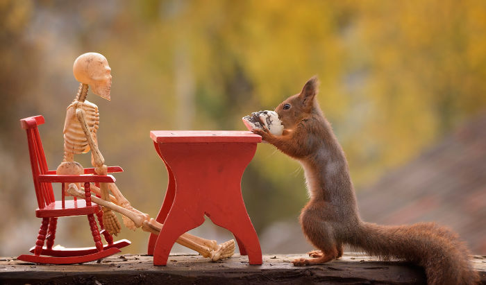 Here's How Squirrels Celebrate Halloween
