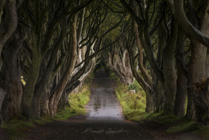 Dark Hedges Alias Kingsroad From Game Of Thrones
