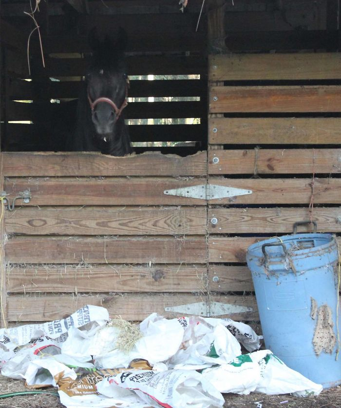 Why You Never Put The Trash Can Next To His Stall