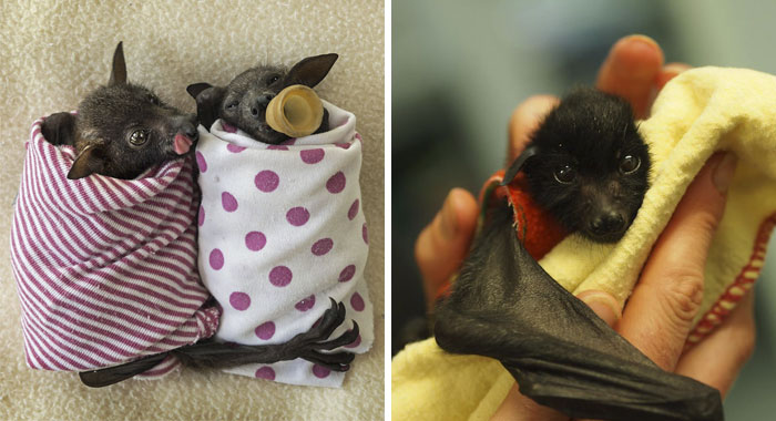 If You Think Bats Are Terrifying These 57 Pics Will Change Your Mind