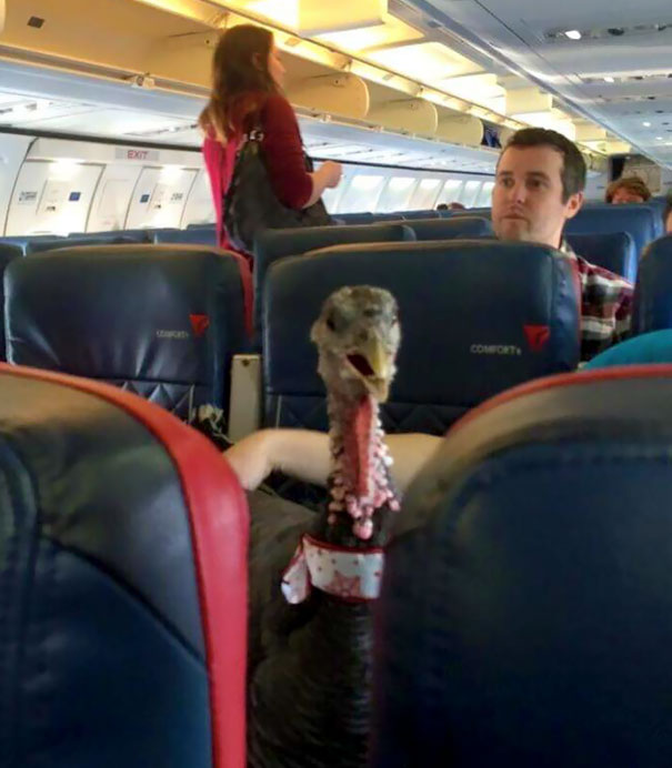 "My Neighbor Is A Flight Attendant. He Just Posted This Photo Of Someone's ""Therapy Pet,"" On His Flight"