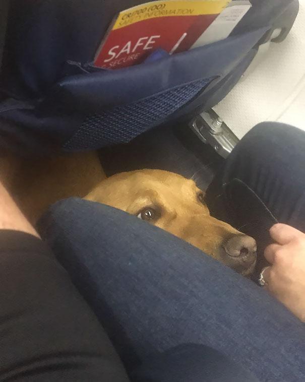 Sky Doggo Didn't Make A Single Awooo All Flight