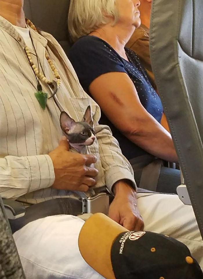 En Mi Avión Hay Un Gato Y Es Adorable