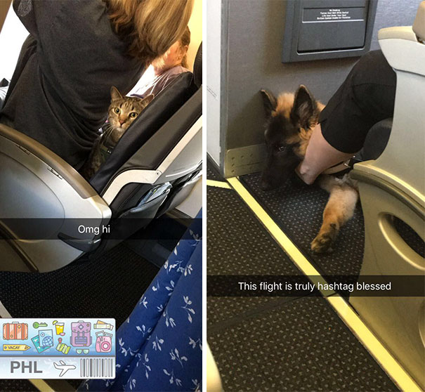 My Flight To School Had A Service Dog And A Service Cat In The Row In Front Of Me