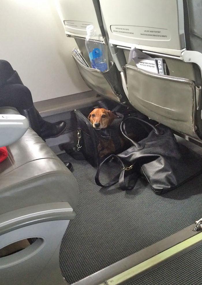 Abrí Una Bolsa De Cecina En El Avión. Este Colega Levantó La Cabeza Y Me Sorprendió