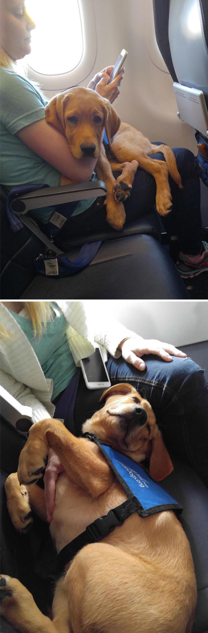 Lamido, Golpeado Y Olido En El Avión