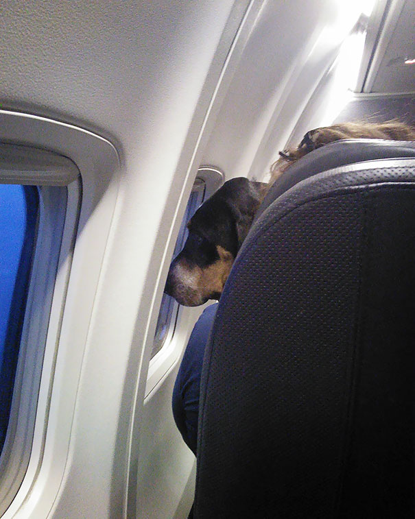 This Guy Sat In Front Of Me Staring Out The Airplane Window For For 5 Hours And He Didn't Make A Sound