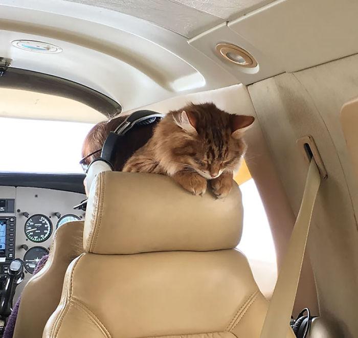 Así Es Cómo Desmond Duerme En Un Avión