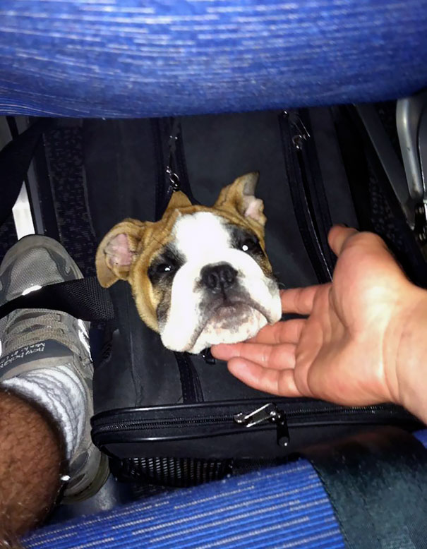 Poking Her Head Out On The Plane