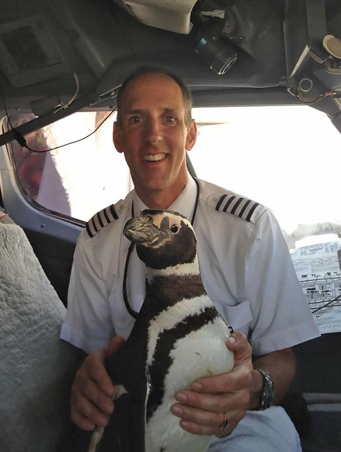 ¿Has Visto Pingüinos En Un Avión? Era Mi Padre Quien Lo Pilotaba
