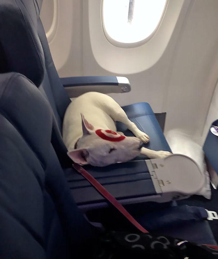 Me Senté Al Lado De Alguien Famoso En El Avión