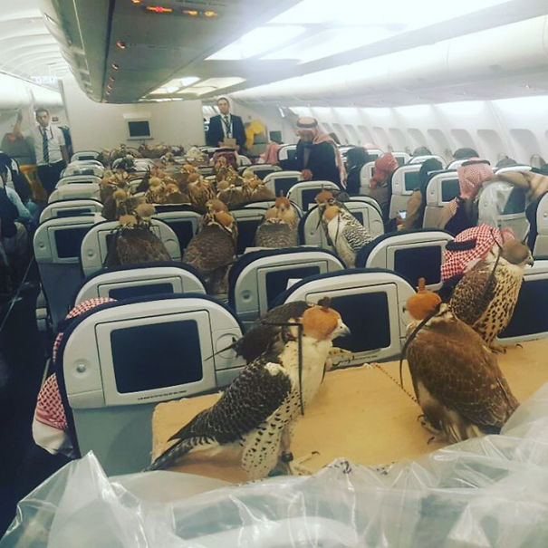 Saudi Prince Buys 80 Seats On A Plane For His 80 Hawks