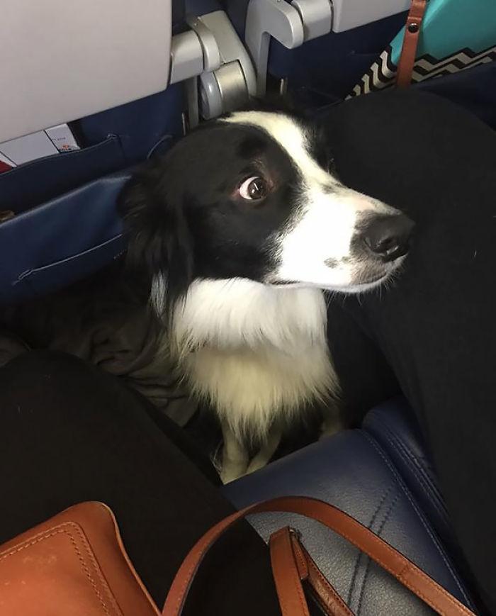 Un Poquito Preocupado Por El Viaje En Avión