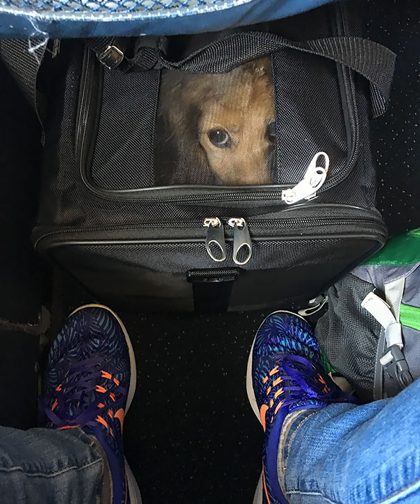 Willie's First Plane Ride Was Traumatic For The Both Of Us
