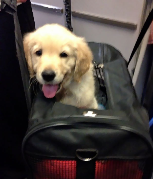 I Work As A Flight Attendant And This Is The Cutest Passenger I've Ever Met