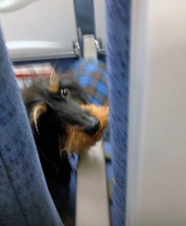 I Accidentally Kicked The Seat In Front Of Me On The Plane Yesterday. I Got A Majorly Dirty Look From The Passenger In Front Of Me. She Was A Real Bitch
