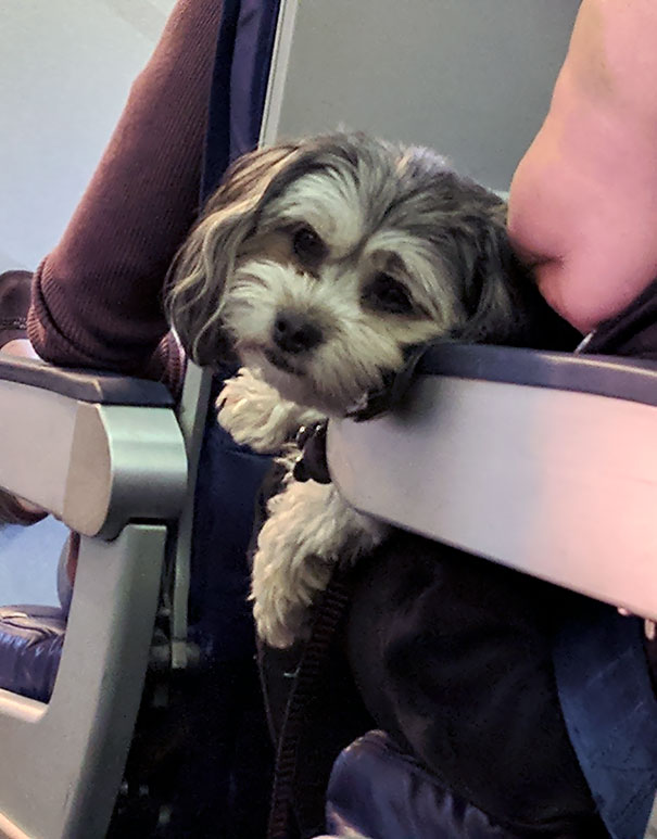 For A Furry Passenger On The Plane