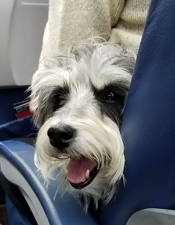 Sitting Next To The Best Passenger Ever