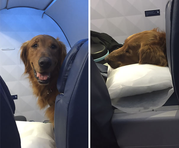 Duke The Bush's Baked Beans Dog Always Flies First Class