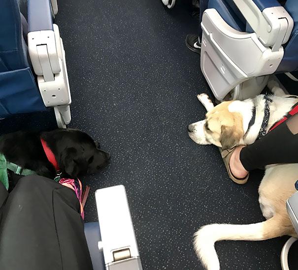 My Boy Made A Friend On The Flight