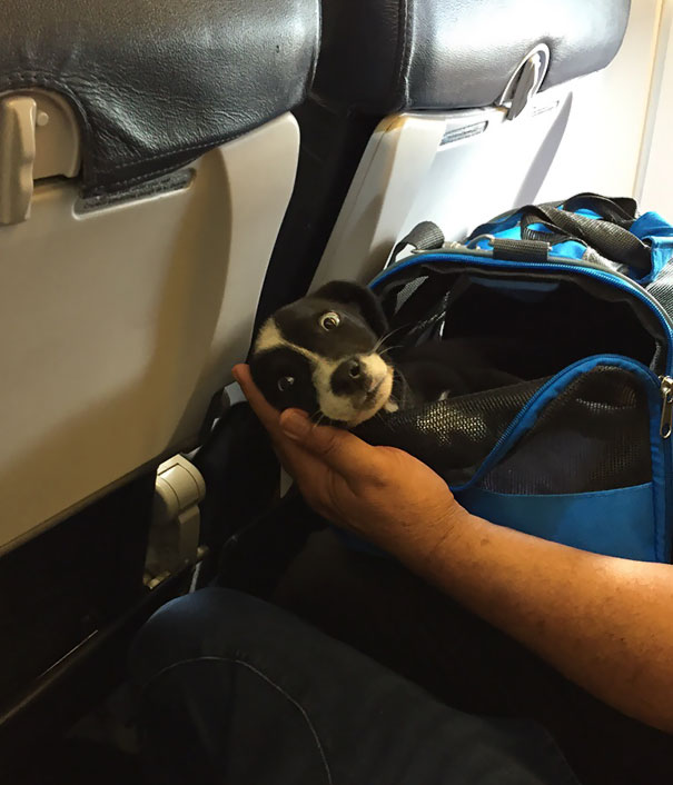 Best Flight Ever