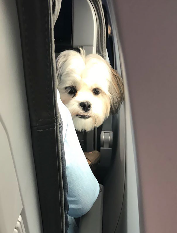 I Also Met A Well Behaved Flyer On My Flight, His Name Was Pablo