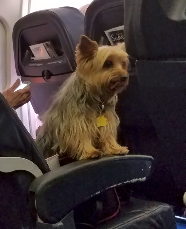 I Am Very Afraid Of Flying. He Made My Flight 100x Less Terrifying. Thanks Pup
