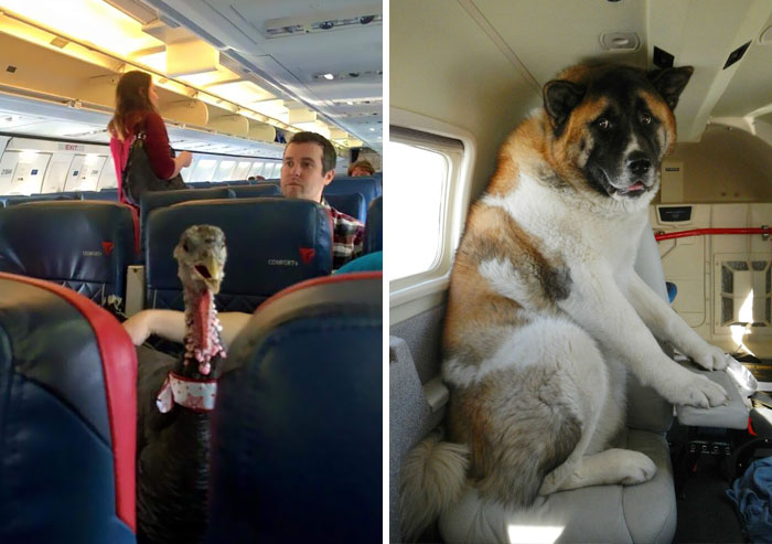 50+ Flights That Had The Best Passengers