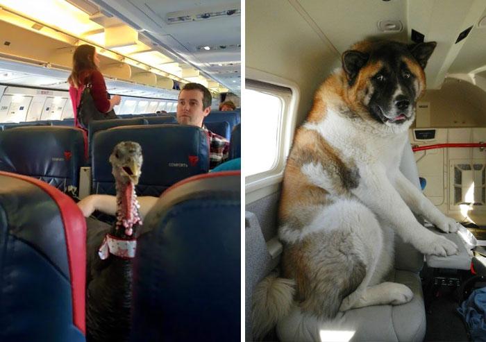 50+ Flights That Had The Best Passengers