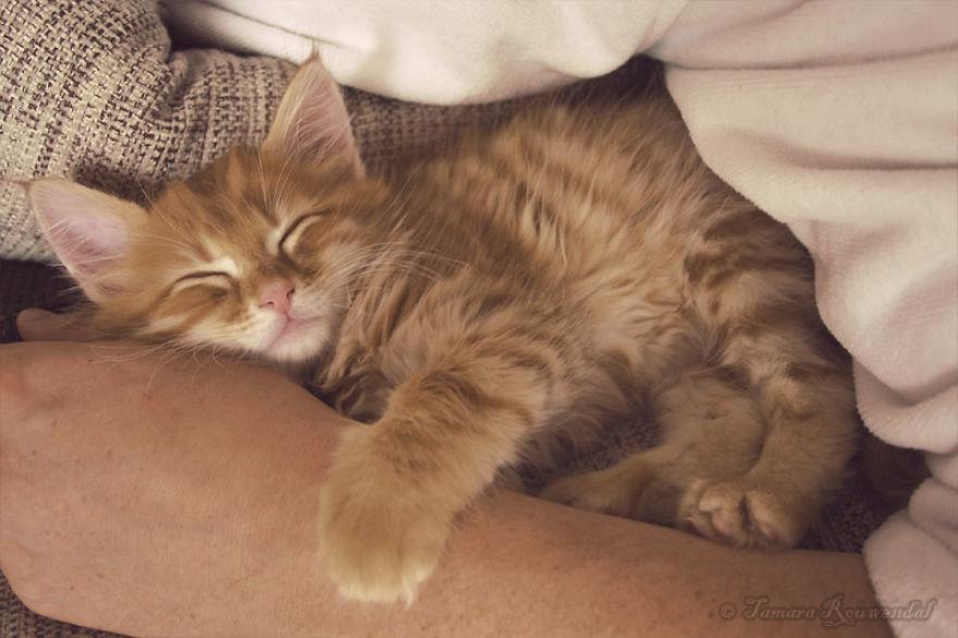 When I Was Just A Kitten - Bink