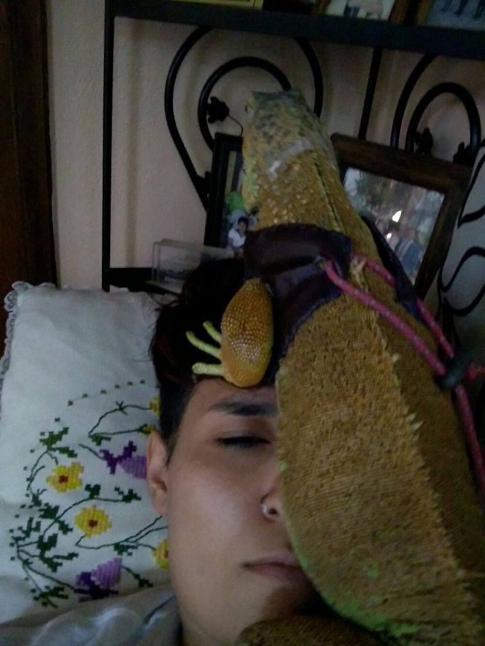 """My Iguana Doesn't Know The Concept Of """"Personal Space"""""""