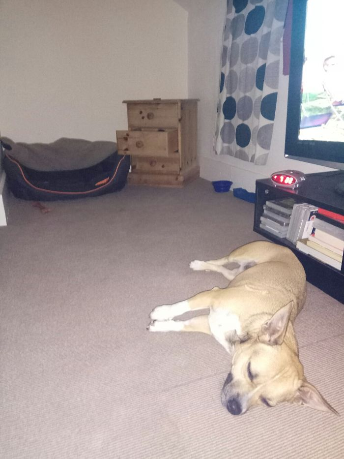 That Bed Was Money Well Spent… Little Twat :)