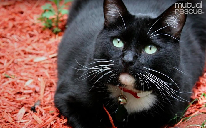 cat-rescue-soldier-life-suicide-scout-josh-marino-11