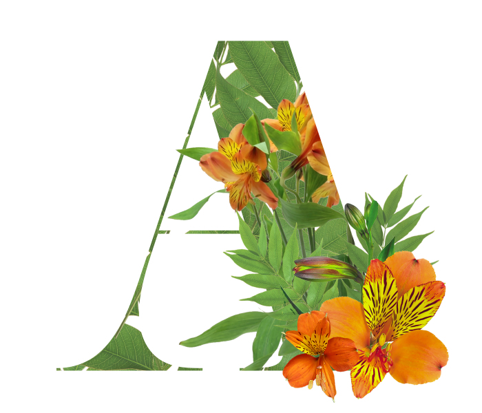 I Wanted To See What The Alphabet Would Look Like Made Out Of Flowers