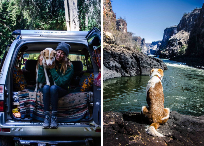 Meet Ginger, A Scared Security Dog From Zambia Who Became A World Traveler