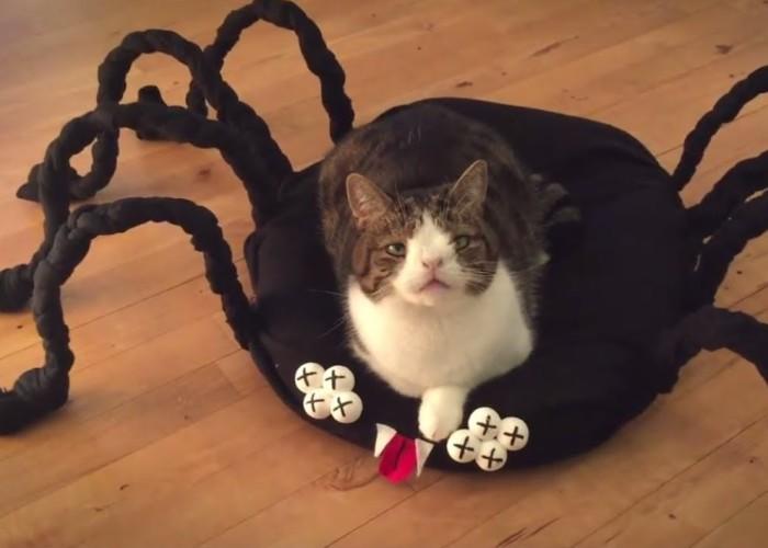 Diy Halloween Spider Cat Bed