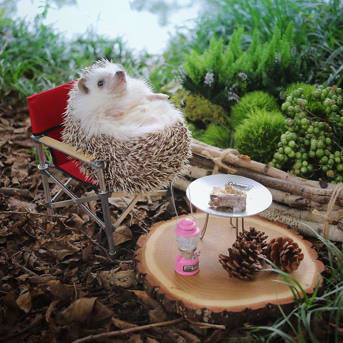 Pogledajte pustolovine malog ježića koji voli kampirat, rafting i roštilj, njegove slike su nešto najbolje što ćete vidjet danas