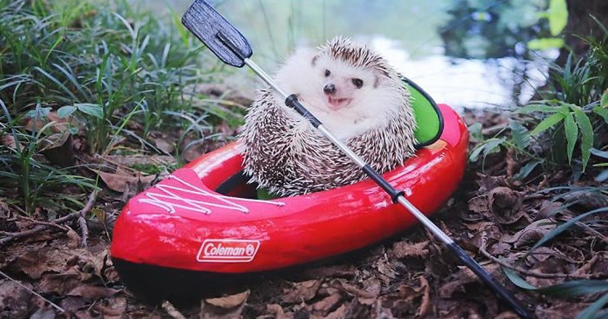 cute-hedgehog-azuki-camping-fb11.png