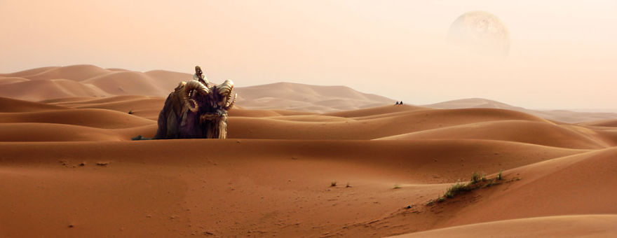 Bantha Desert