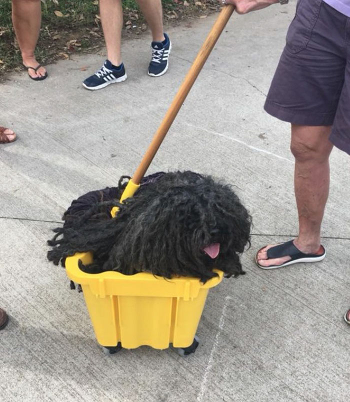 dog-mop-halloween-costume-mainstrasse-paw-rade-2