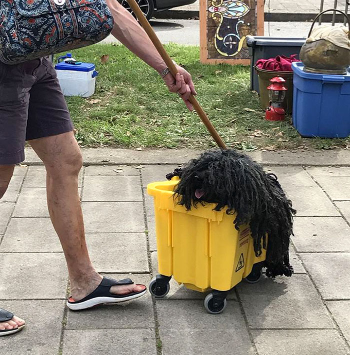 dog-mop-halloween-costume-mainstrasse-paw-rade-3 & Woman Dresses Her Dog As A Mop And Itu0027s Probably The Best Pet ...