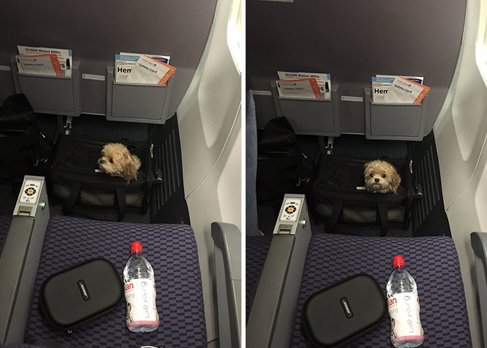 There's A Puppy On My Plane And It Just Made My Flight 100x Better