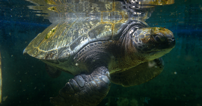 I've Been Photographing The Sea Turtle Rescue Center For 4