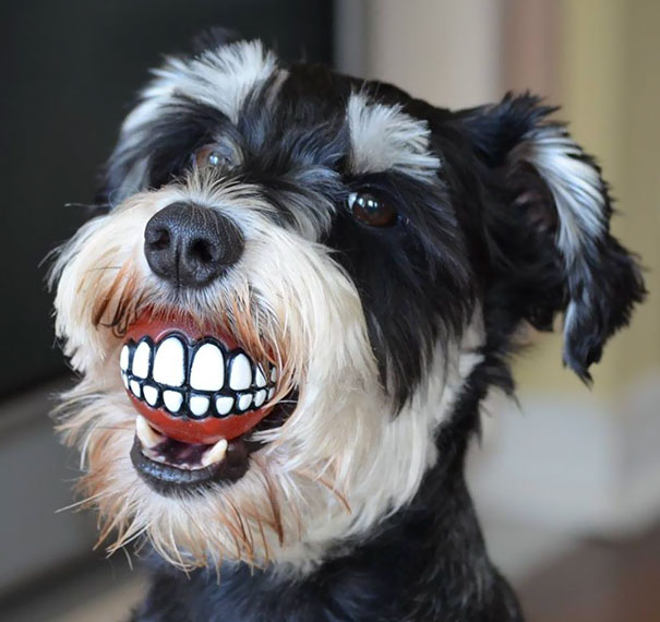 My Friend's Dog Has A Ball From Their Dentist