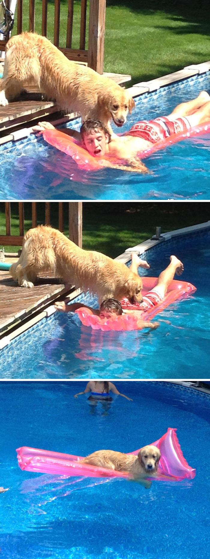 Mi perro intentando ahogarme para robarme la colchoneta
