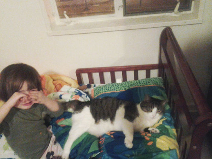 The Second Night This Week My 3 Year Old Daughter Has Woken Up Crying… Our Smug Spoiled Cat Has Stolen Her Pillow