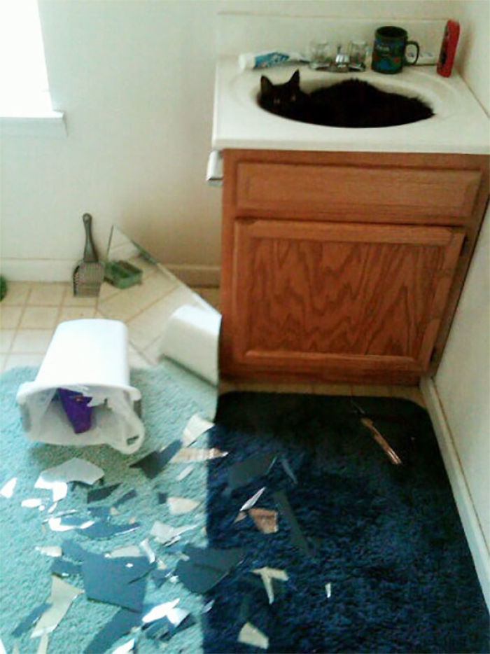 That Time My Cat Redecorated My College Bathroom