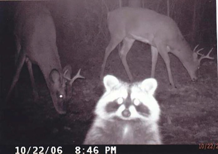 Anoche hubo una fiesta y el mapache se hizo un selfie